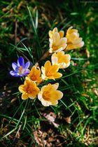 Frühling!