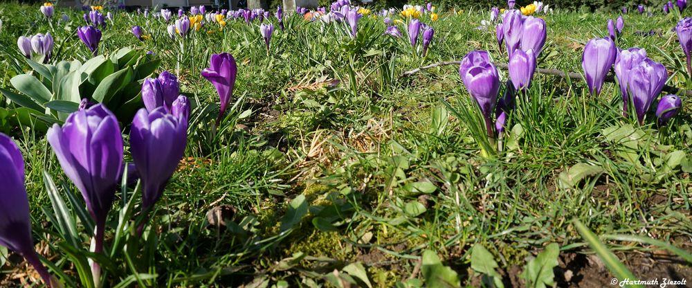 !Frühling!