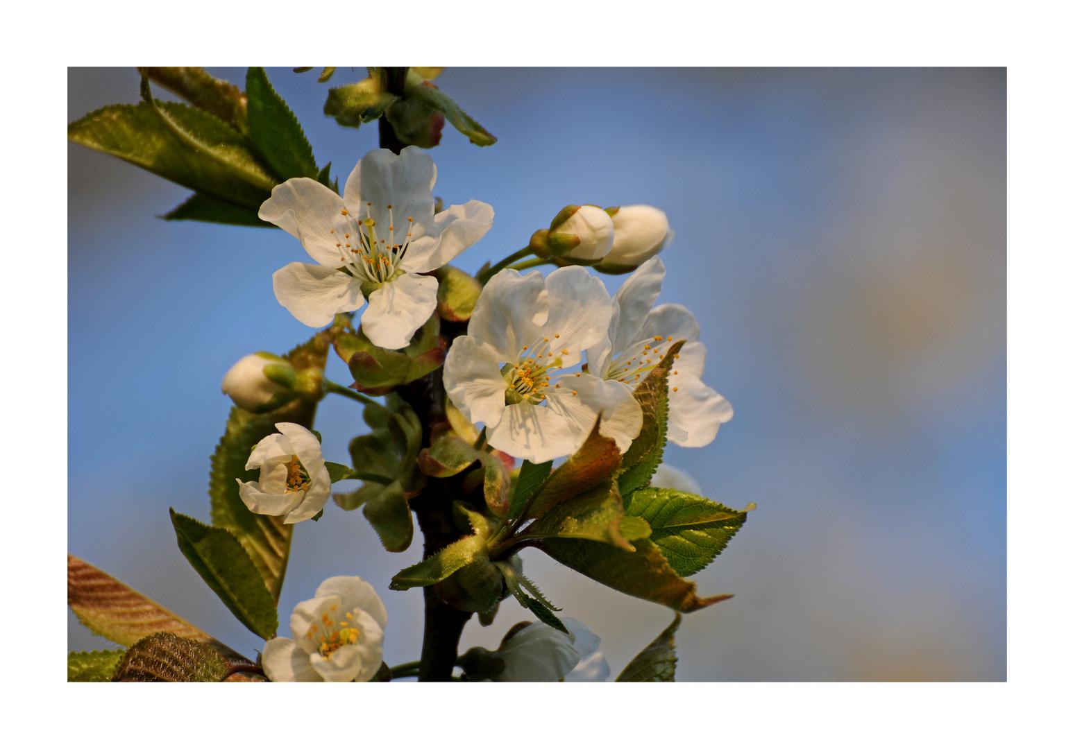 [ Frühling ]