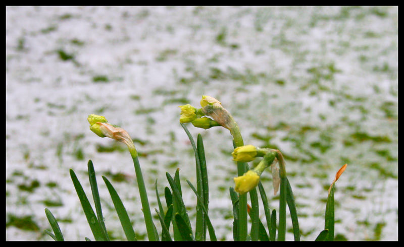 Frühling ?