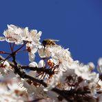 Frühling ahoi... es summt und brummt wieder :-)