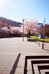 Frühling allerorten