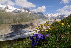 Frühling am Aletsch (2)