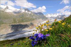 Frühling am Aletsch