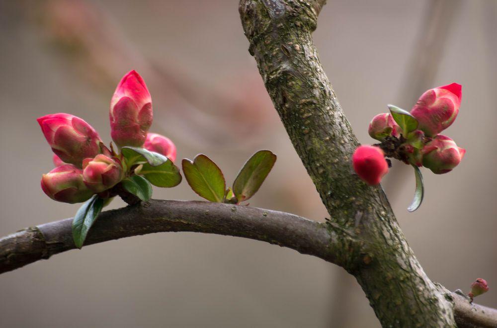 Frühling am Hochrhein