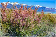 Frühling am Mono Lake