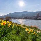 Frühling am Neckar