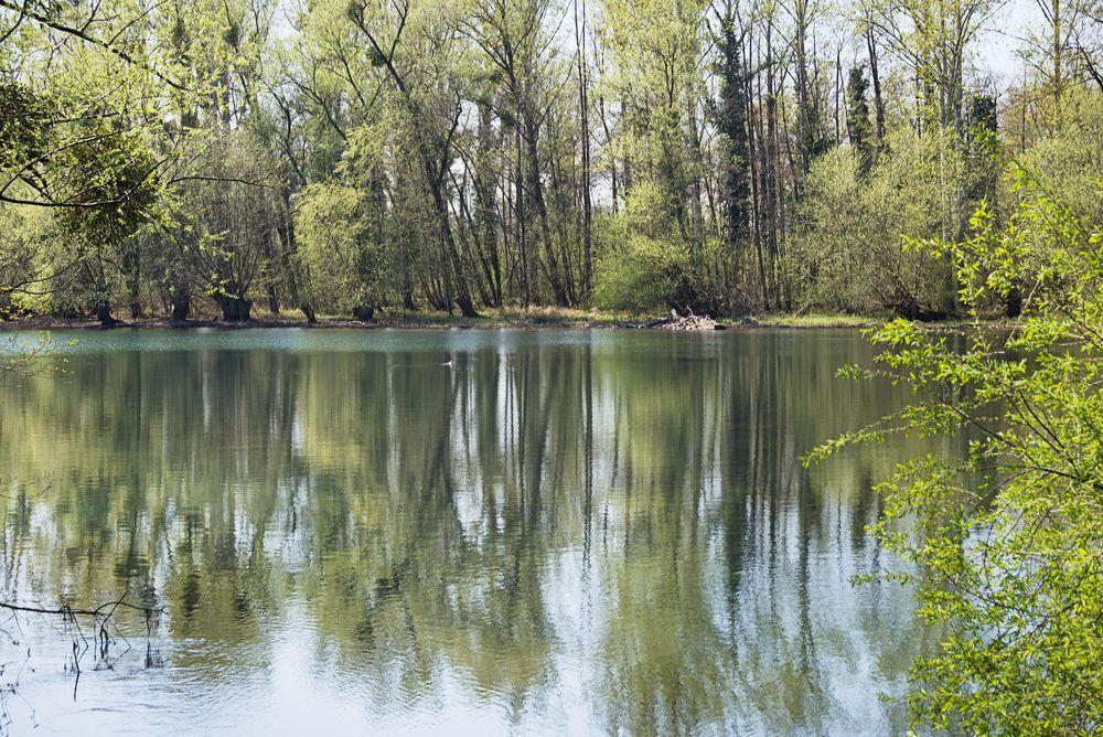 Frühling am oberen Groschenwasser