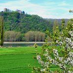Frühling am Rhein ...
