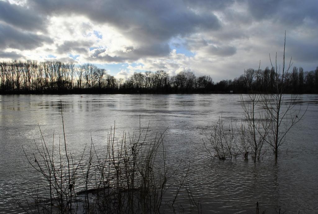 Frühling am Rhein(bei Worms)