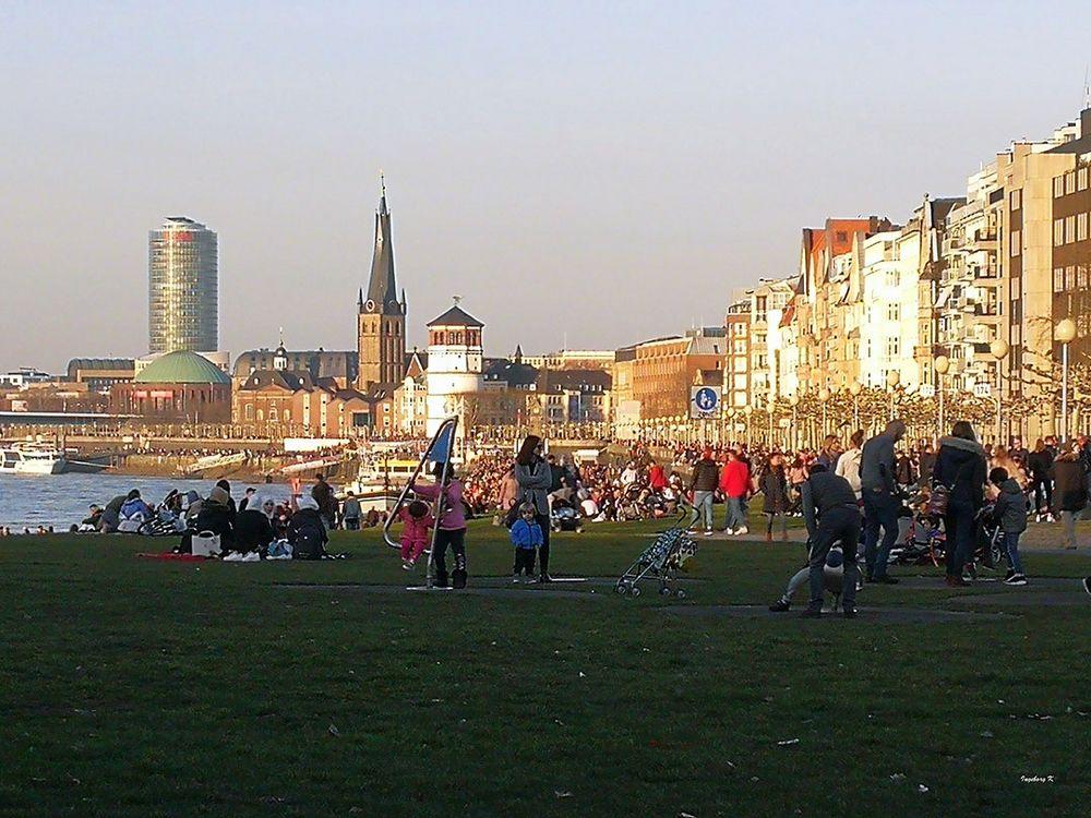 Frühling am Rheinufer in Düsseldorf am 17.2. 2019