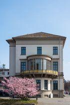 Frühling am Wangenheimpalais, Hannover