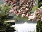 Frühling am Weiher