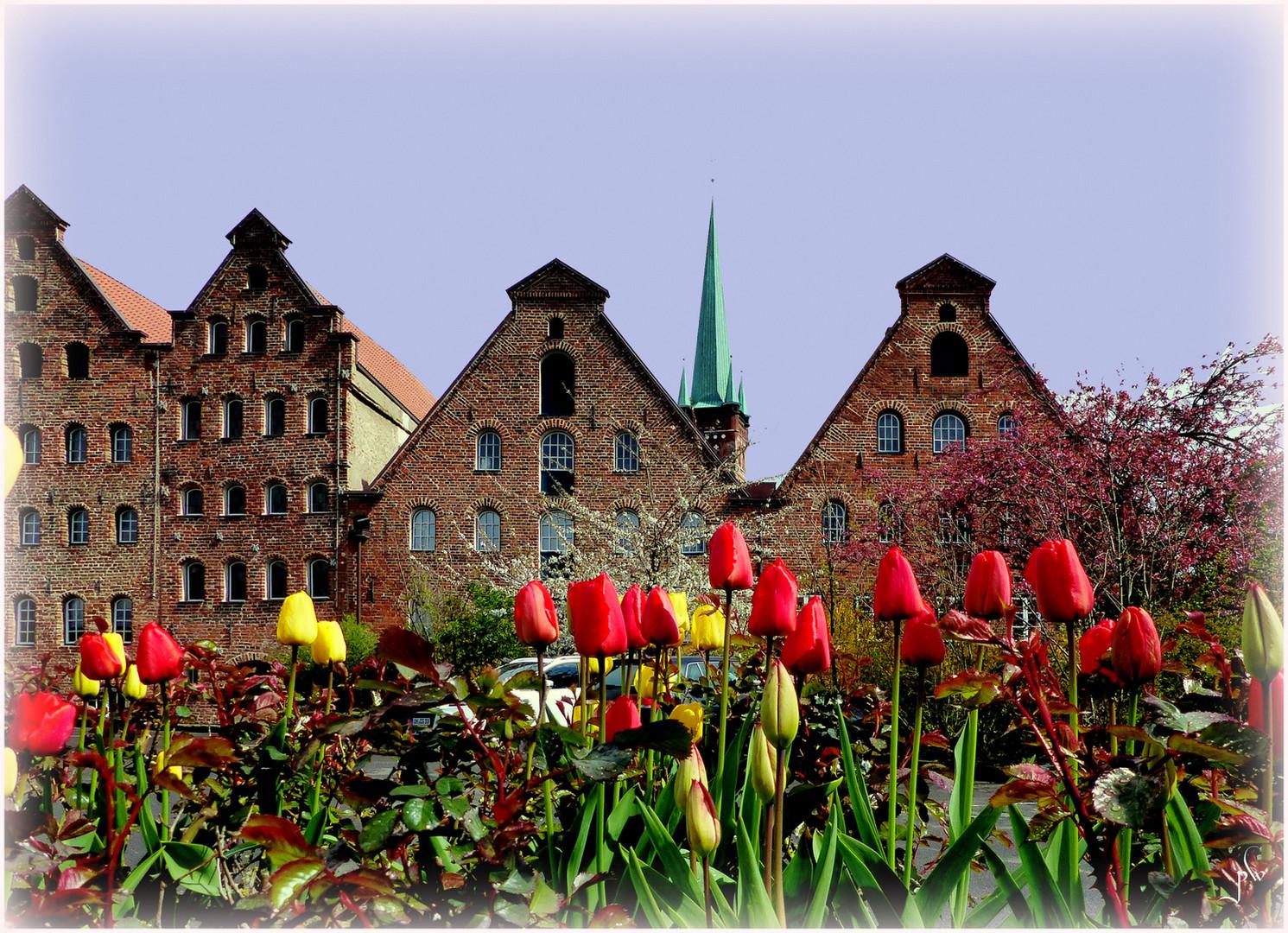 Frühling an den Salzspeichern in Lübeck