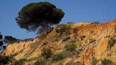 Frühling an der Algarve