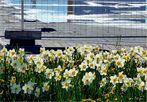 Frühling an der Baustelle