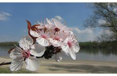 Frühling an der Donau