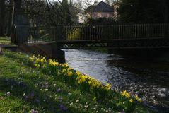 Frühling an der Oos