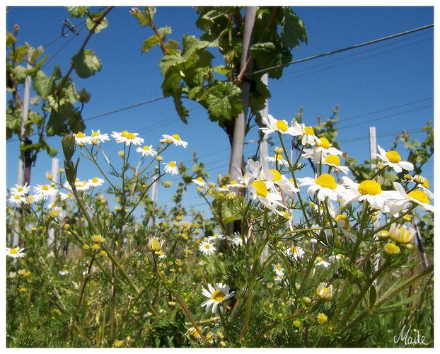 Frühling an der SÜW