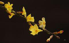 Frühling an Hochrhein