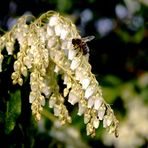 Frühling auch bei den Bienen