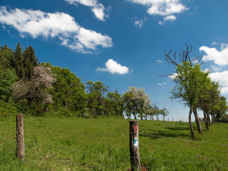 Frühling auf dem Natursteig Sieg