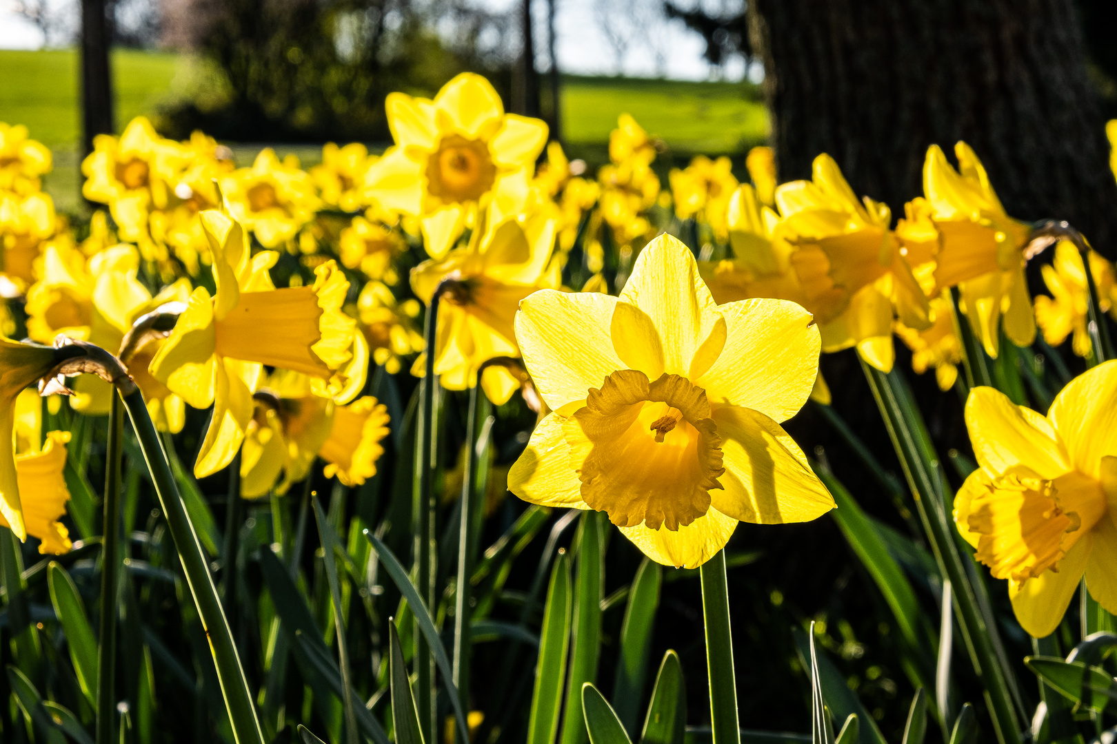 Frühling auf dem Westerberg