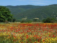 Frühling auf der Chalkidiki
