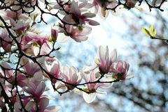 Frühling auf der Rosenhöhe