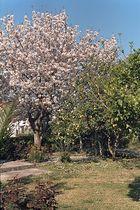 Frühling auf Korfu