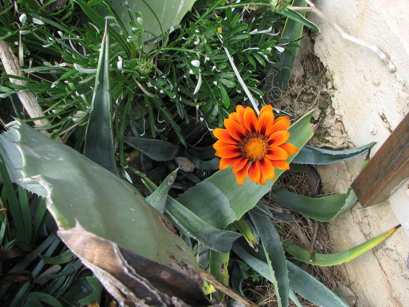 Frühling auf Sardinien