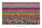 Frühling auf Texel 2