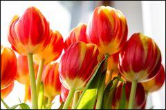 Frühling aus Amsterdam