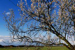 Frühling!!!!