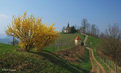 Frühling bei Gengenbach/Schwarzwald