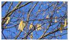 Frühling - blau-goldener Tag