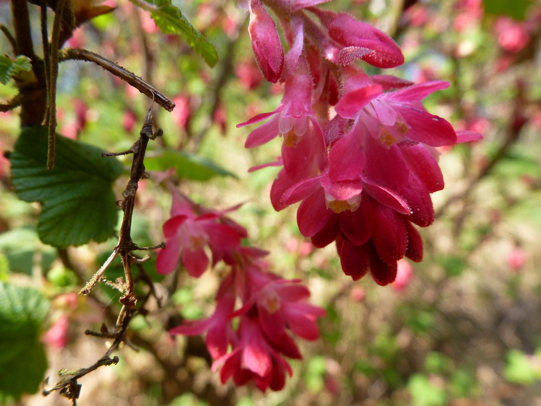 Frühling -Blüten-
