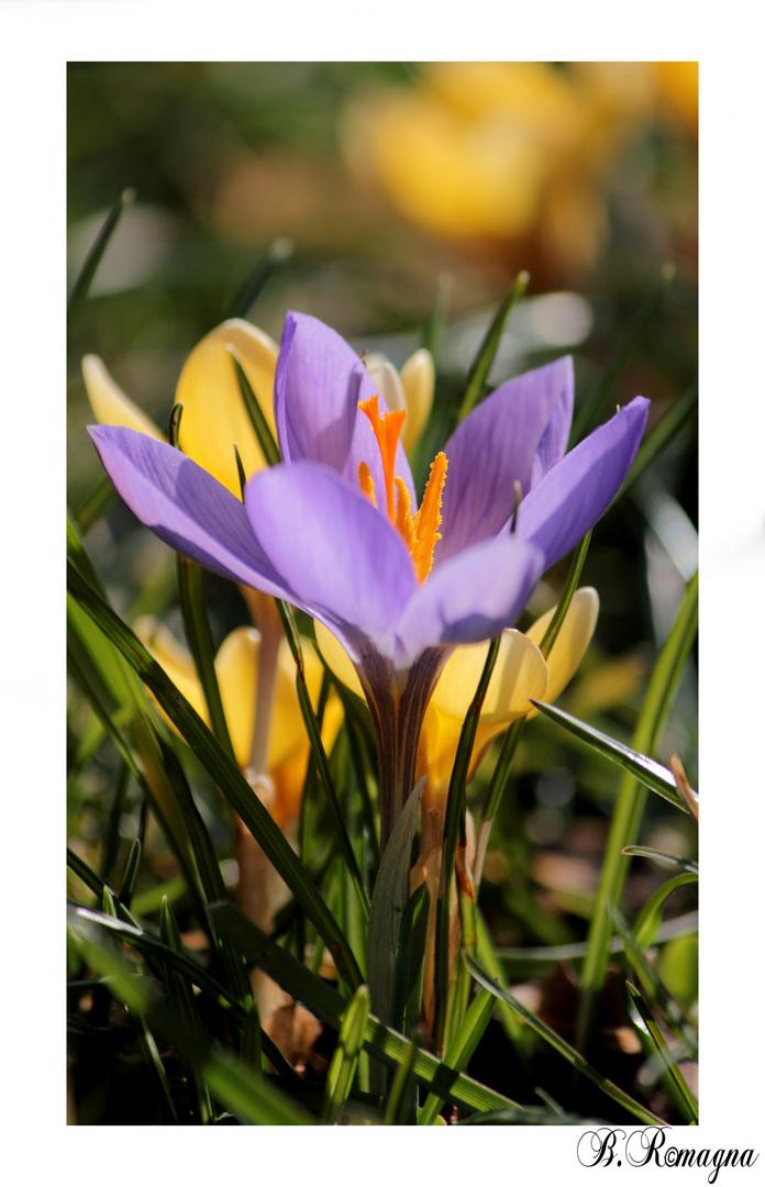 Frühling.....