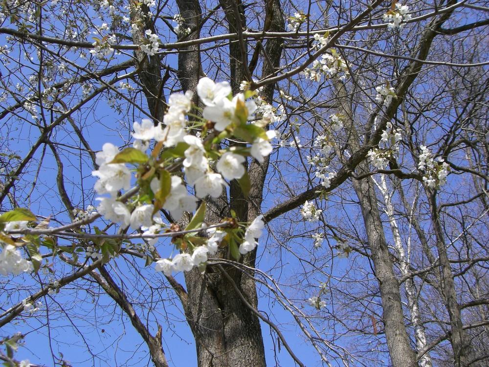 Frühling daheim