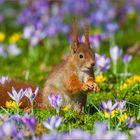 ~ Frühling ~