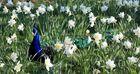 Frühling doch lieber Frühling