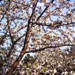 Frühling-du bist da?!