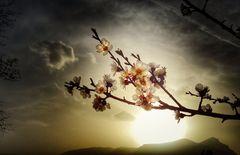 Frühling, du Wonne der Natur