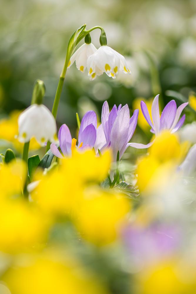 ~ Frühling! ~