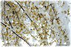 Frühling eiskalt;SG;CH
