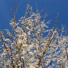 Frühling erwacht