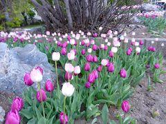 Frühling... es ist bald so weit...