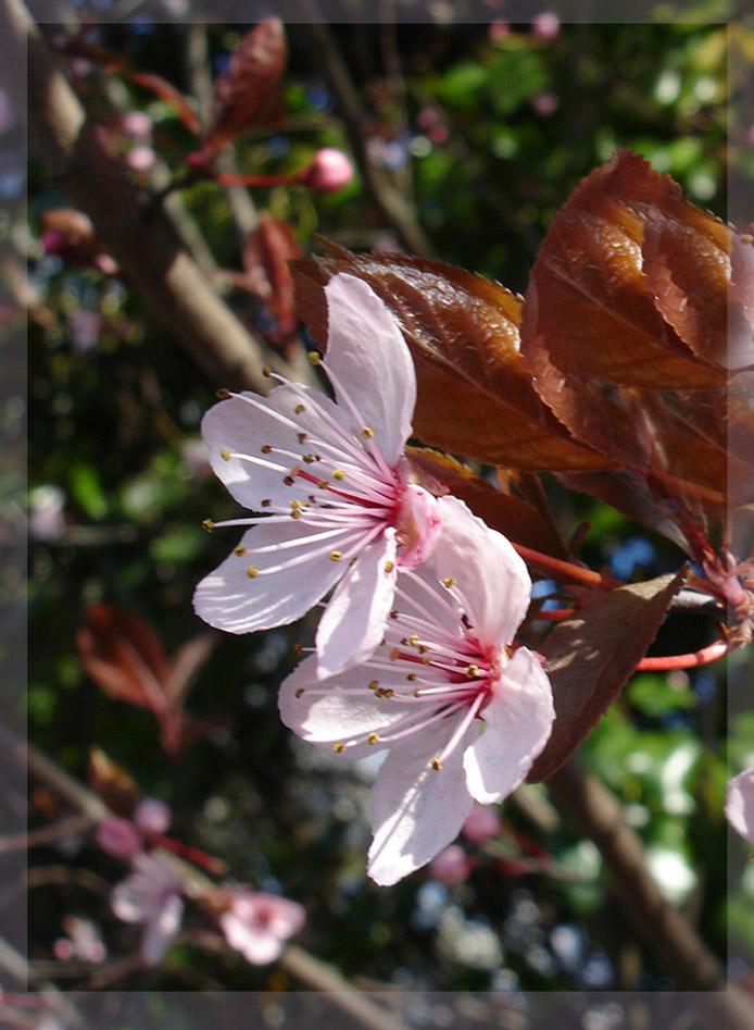 Frühling filigran (2)