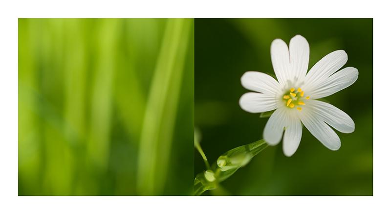 Frühling - frisch