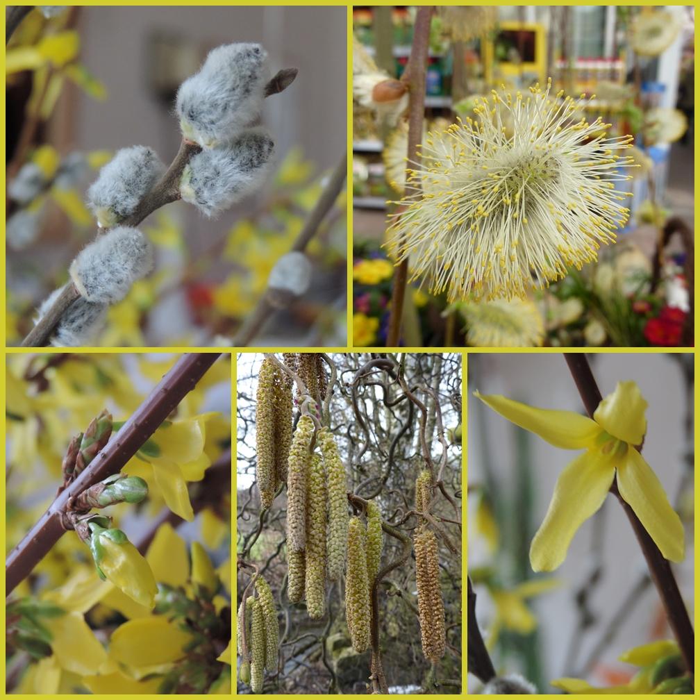 Frühling, Frühling......